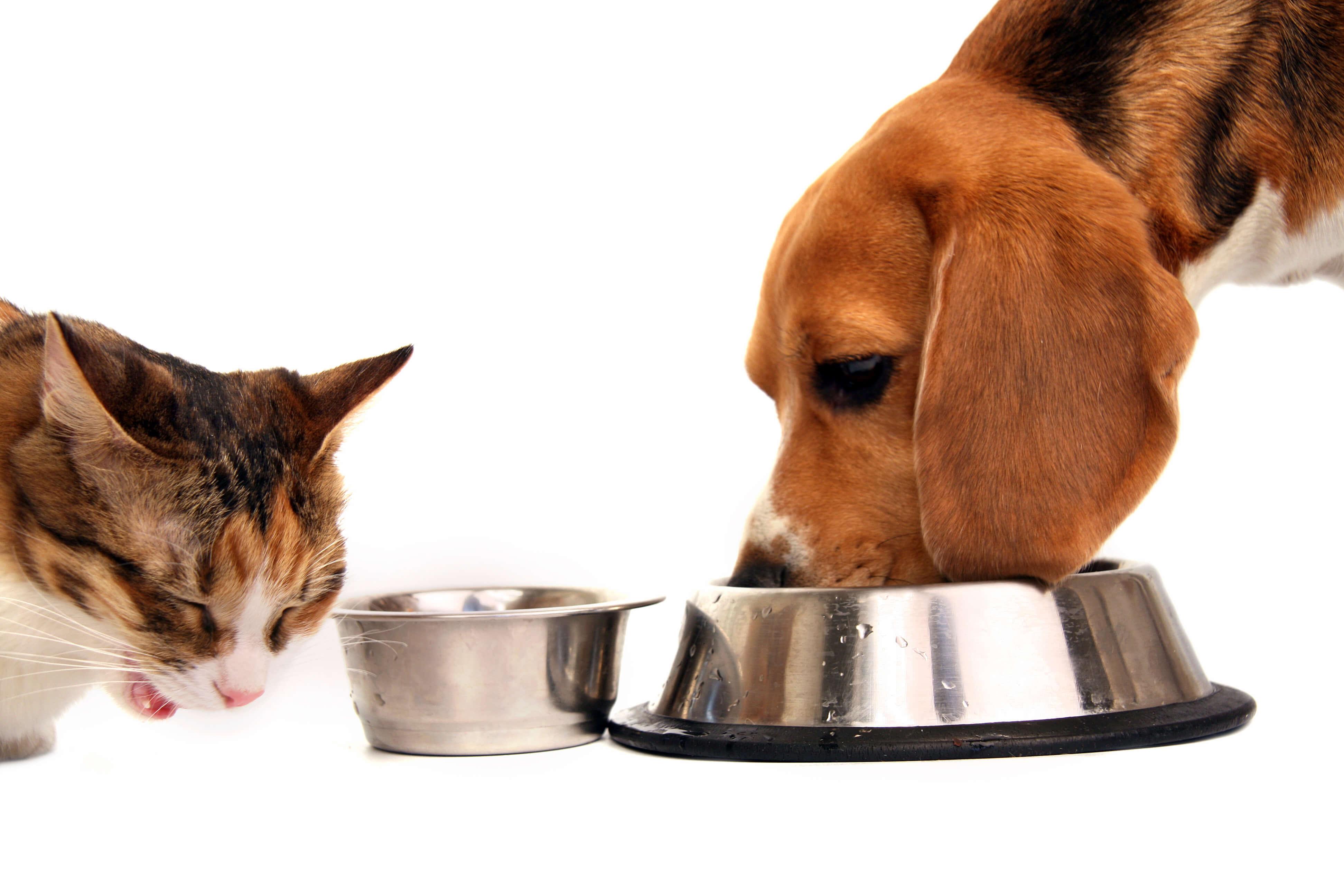 エサを食べる猫と犬